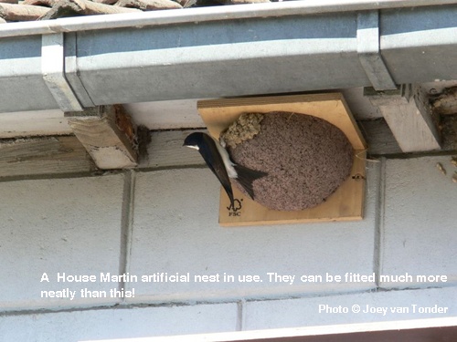 A  House Martin artificial nest in use. They can be fitted much more neatly than this!